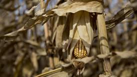 Si la prioridad de la 4T es el sector 'agro', vamos en sentido contrario: Bosco de la Vega