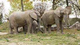 Neurotoxinas en pozos de agua, causa de la 'misteriosa' muerte de elefantes en Botswana