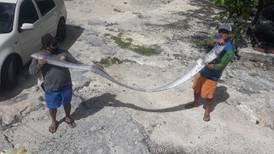 Capturan a pez remo en Cozumel; en Japón se asocia con sismos y maremotos