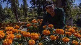 Cae 60% producción de cempasúchil en Xochimilco por pandemia