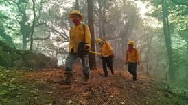 Estudiantes de la UAEM convocan a rescatar animales salvajes tras incendio en Tepoztlán