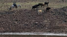 Pese a incremento de lluvias, más del 75% del territorio nacional está afectado por la sequía: SMN