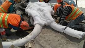 Encuentran restos de 60 mamuts en nuevo Aeropuerto de Santa Lucía