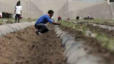 Hacienda da el 'tiro de gracia' al programa de aseguramiento agropecuario