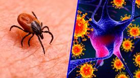 'Yezo', un nuevo virus japonés que transmite la picadura de garrapata