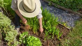 ¿Cómo se 'movió' el sector agroalimentario tras la llegada de la 4T? Esto dice Beatriz Paredes