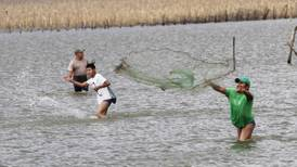 Veda de camarón inicia en la Península de Yucatán