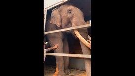 Conoce a Big Boy, el elefante que fue liberado 40 años después en Jalisco