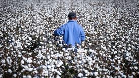 ¿Cómo garantizar el lugar de México en la producción mundial de algodón?