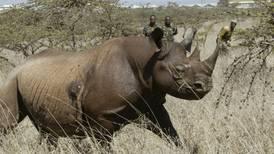 Mueren 7 rinocerontes en intento de traslado