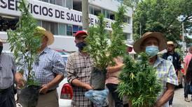 Tetecala busca ser el 'primer pueblo cannábico en México'