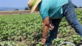 Sin huella ecológica: Así se mueve la economía circular en el sector agroalimentario