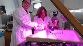 Agregar a tu dieta el alga Spirulina podría darte protección contra COVID: estudio del IPN