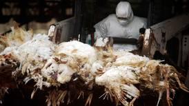 Rusia reporta primeros casos de cepa H5N8 de la gripe aviar en humanos