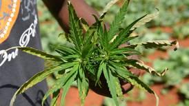 ¿Qué está pasando?: la mariguana se agota en este país del Caribe