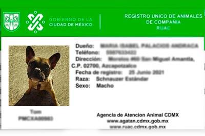 Sé un dueño responsable: Te decimos de qué va la 'CURP para mascotas' en CDMX