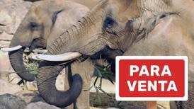 Se venden elefantes: Zimbabue
