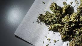 Diputados inician análisis de la reforma para regular uso de la mariguana