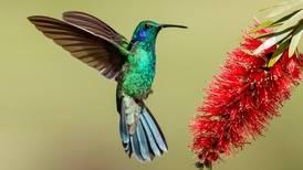 Sabiduría y magia: La creación del colibrí según los Mayas