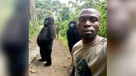 La singular selfie de las gorilas y sus protectores que recorre el mundo