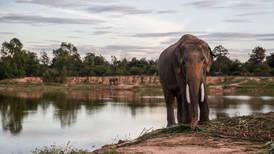 ¿Te preocupa la conservación de elefantes? A Botsuana no le resulta fácil tener tantos...
