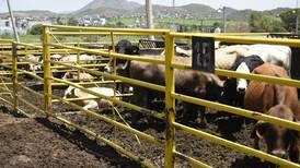 César Duarte se queda sin ganado: Gobierno de Chihuahua lo subasta