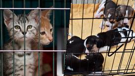Naucalpan prohíbe la venta de todos los animales en centros comerciales y mercados
