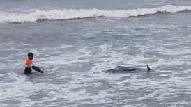 Rescatan a 100 ballenas varadas en playa de Sri Lanka