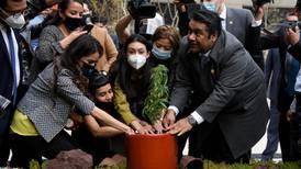 Uso lúdico de mariguana en México: Diputados lo aprueban en lo general