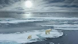Se le acaba el hielo al Ártico y las aves marinas lo resienten