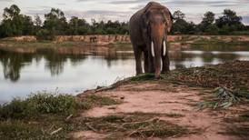 De Beers se suma a esfuerzos por salvar elefantes
