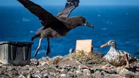 Esta isla en México se convirtió en el 'salvavidas' de los albatros de patas negras