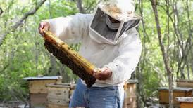 Las mieles del pulpo que la apicultura desea