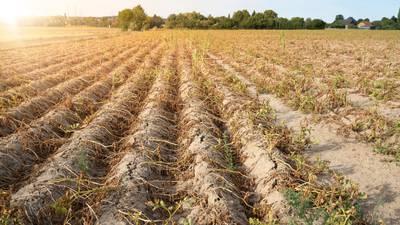Cambio climático es la mayor incógnita para el sector agrícola en México: Víctor Villalobos