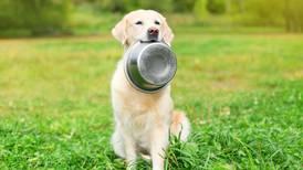 Mucho ojo: estos ingredientes de la comida para perros pueden dañar el corazón de tu 'lomito'