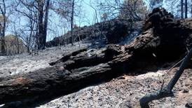 Profepa denuncia a mujer acusada de provocar incendio forestal en Tepoztlán por grabar TikToK